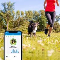Tractive GPS DOG 4 - Collier GPS pour chien avec suivi d'activité