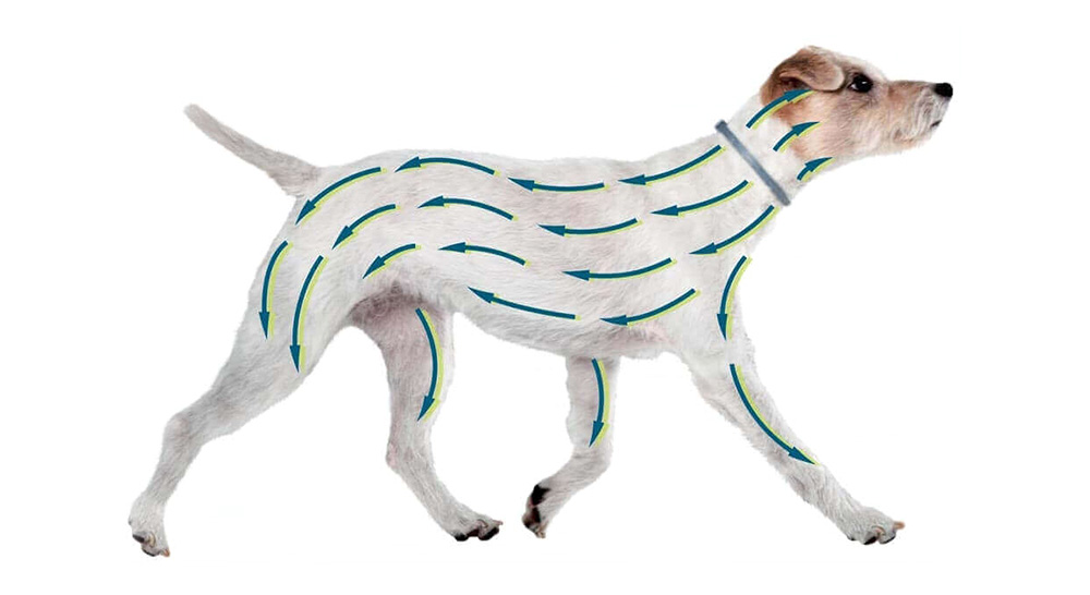 collier seresto pour chien protection optimale chez Zoomalia