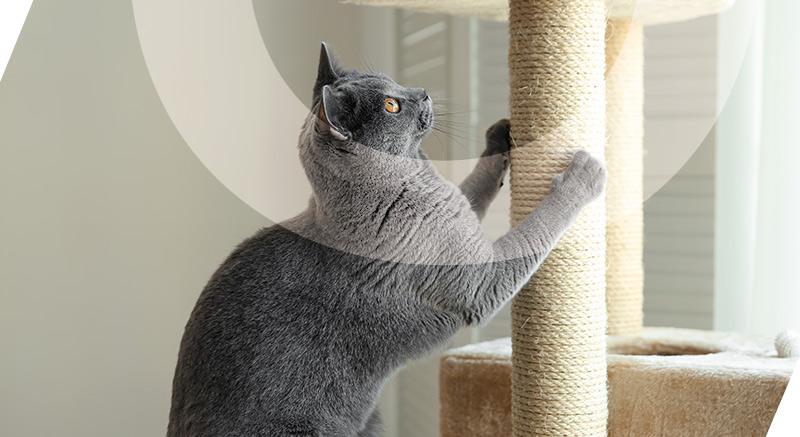arbre à chat fixy zolia idéal chats d'intérieur