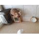 Gamelle-en-ceramique-avec-support-bambou-Zolia-Chuky_de_myriam_161393105960a178a6162263.50650088