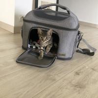 Sac de transport vanity bandoulière pour chat Zolia Greys