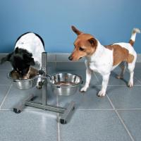 Bar pour chien (2)