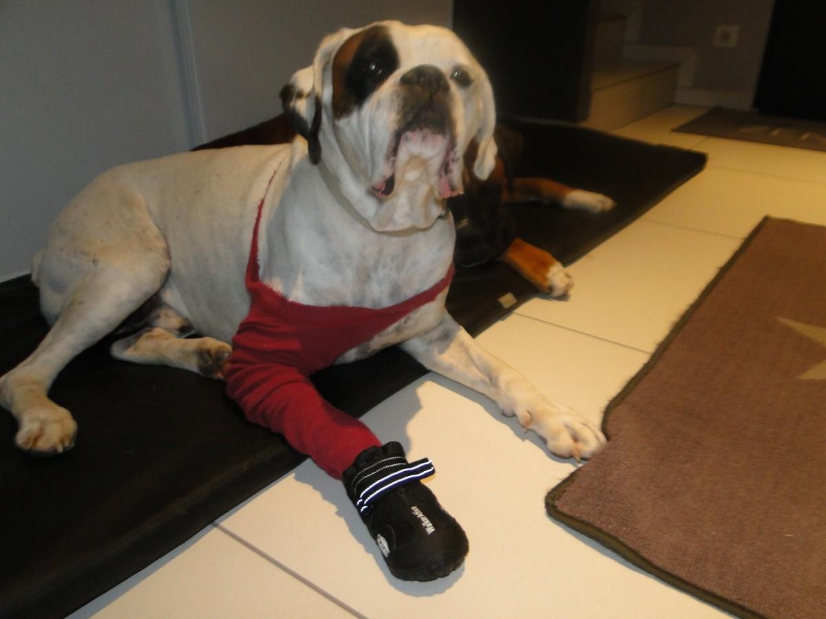 9609_Bottes,de,protection,pour,chien ,Walker,Active_de_NATHALIE_16470088985631e5dfe09d95.07986194