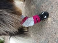 9609_Bottes-de-protection-pour-chien-Walker-Active-(Par-2)_de_Lydie_10773609755b225a8306c521.41389619