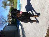 9609_Bottes-de-protection-pour-chien-Walker-Active_de_Christine_1081607088535ffab8e9c988.37672521