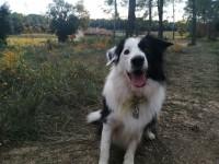 Bottes-de-protection-pour-chien-Walker-Active-(Par-2)_de_mylene_8323320065df647cf9a2e84.45877765