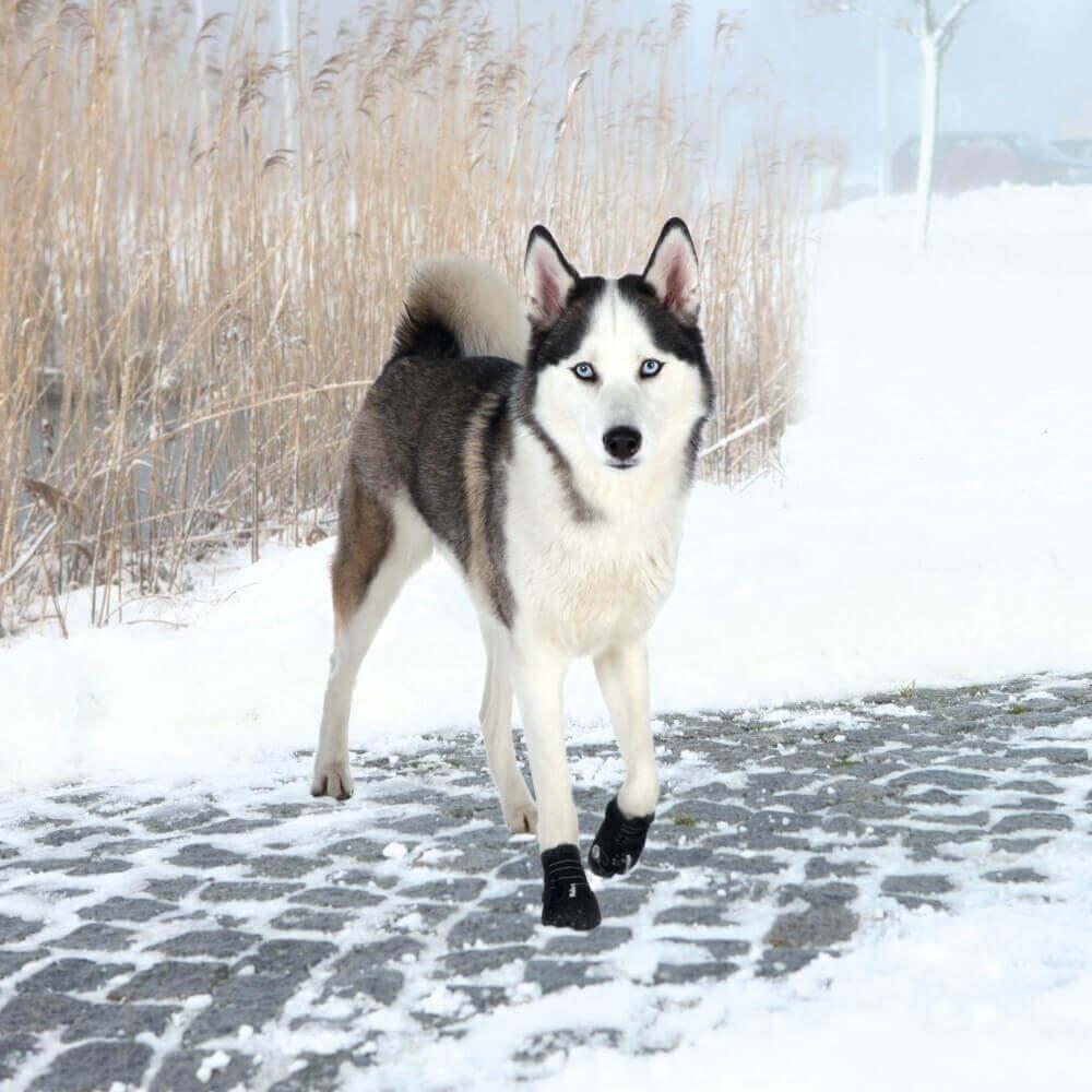 bottes de protection pour chien walker active chaussures et chaussettes. Black Bedroom Furniture Sets. Home Design Ideas