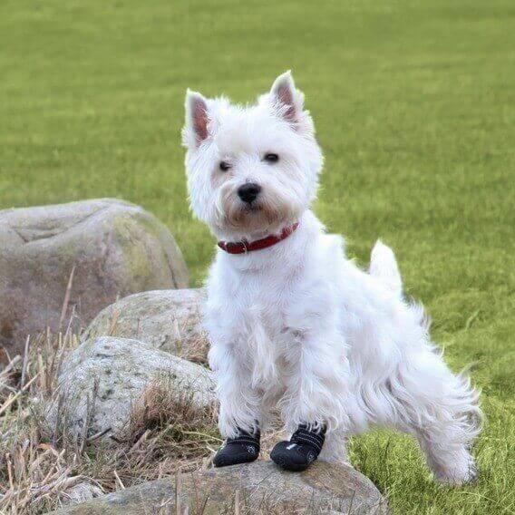 bottes de protection pour chien walker active bottes pour chien. Black Bedroom Furniture Sets. Home Design Ideas