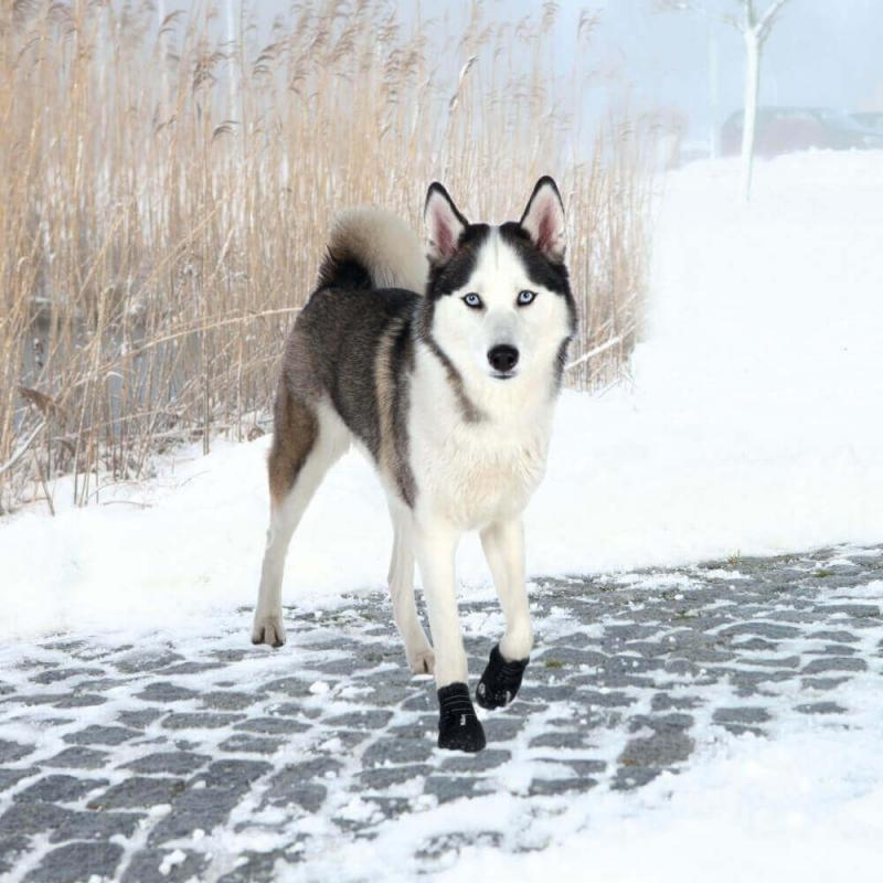 Bottes de protection pour chien Walker Active (Par 2)