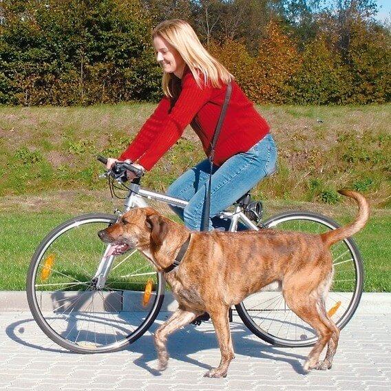 Laisse vélo et jogging