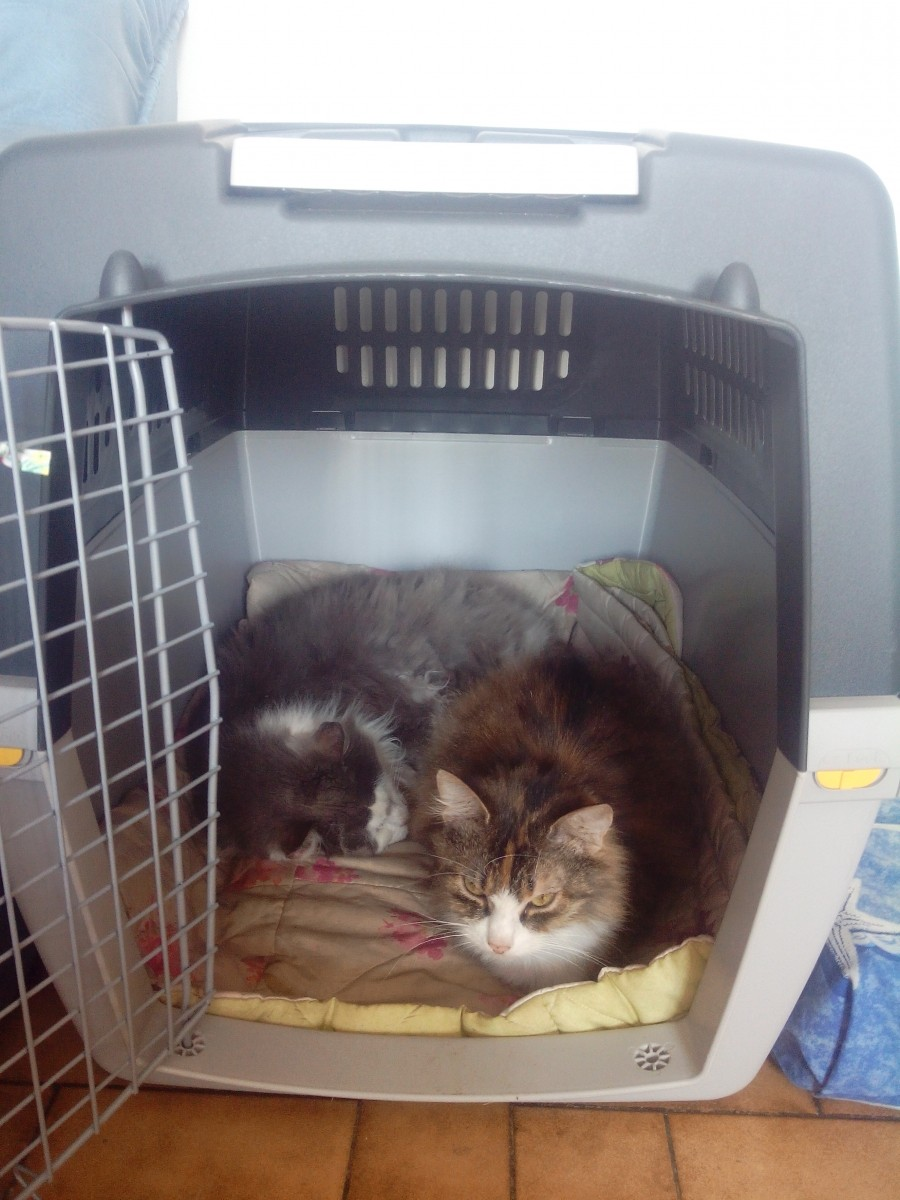 avis sur cage de transport chien et chat gulliver homologu es iata. Black Bedroom Furniture Sets. Home Design Ideas