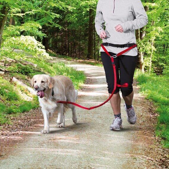 Ceinture ventrale avec laisse pour chiens de moyenne et grande taille canicross - Laisse lasso pour chien ...