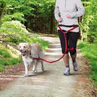 Ceinture ventrale avec laisse pour chiens de moyenne et grande taille