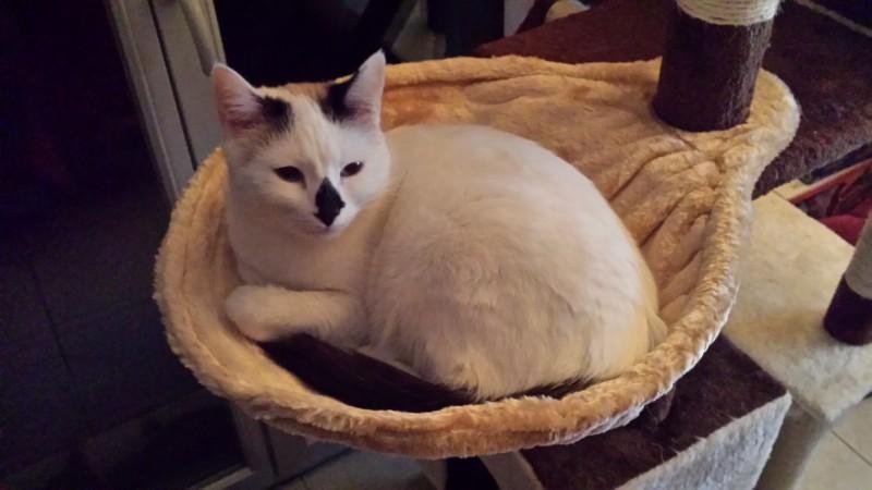 avis sur nid hamac pour poteau griffoir beige pour chat. Black Bedroom Furniture Sets. Home Design Ideas