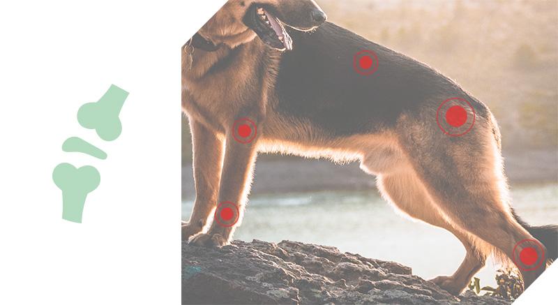 croquettes chiens light grain free medium large quality sens articulations
